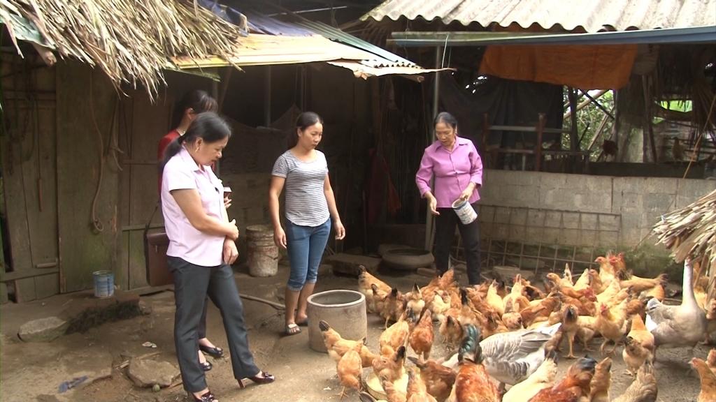 定化县: 转移养殖机构