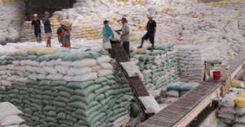 Đẩy mạnh thu mua, tiêu thụ lúa gạo