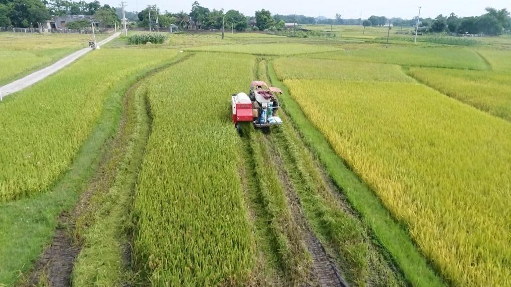 Giá trị sản xuất nông, lâm nghiệp, thuỷ sản tăng gần 4%