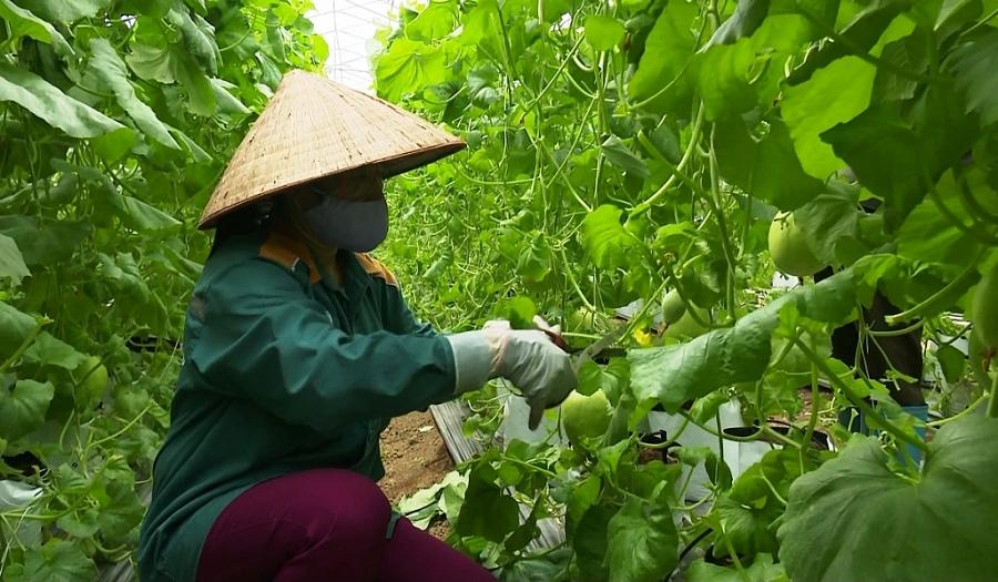 Hình thành những vùng sản xuất nông sản an toàn