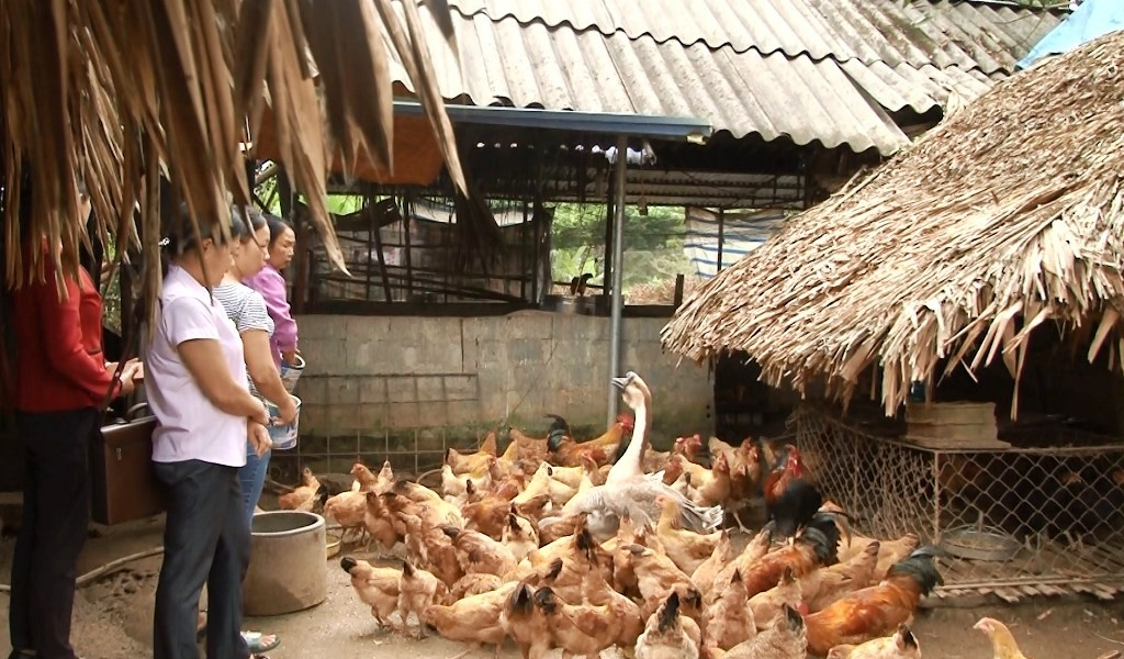 Định Hóa: Chuyển dịch cơ cấu trong chăn nuôi