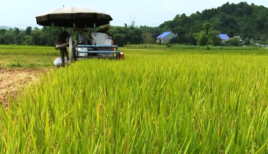 Thái Nguyên: Gia tăng giá trị ngành lúa gạo