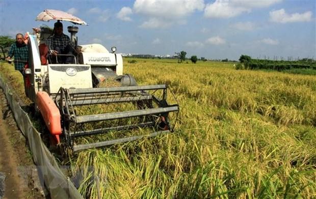 Ban hành kế hoạch hành động bảo đảm an ninh lương thực quốc gia