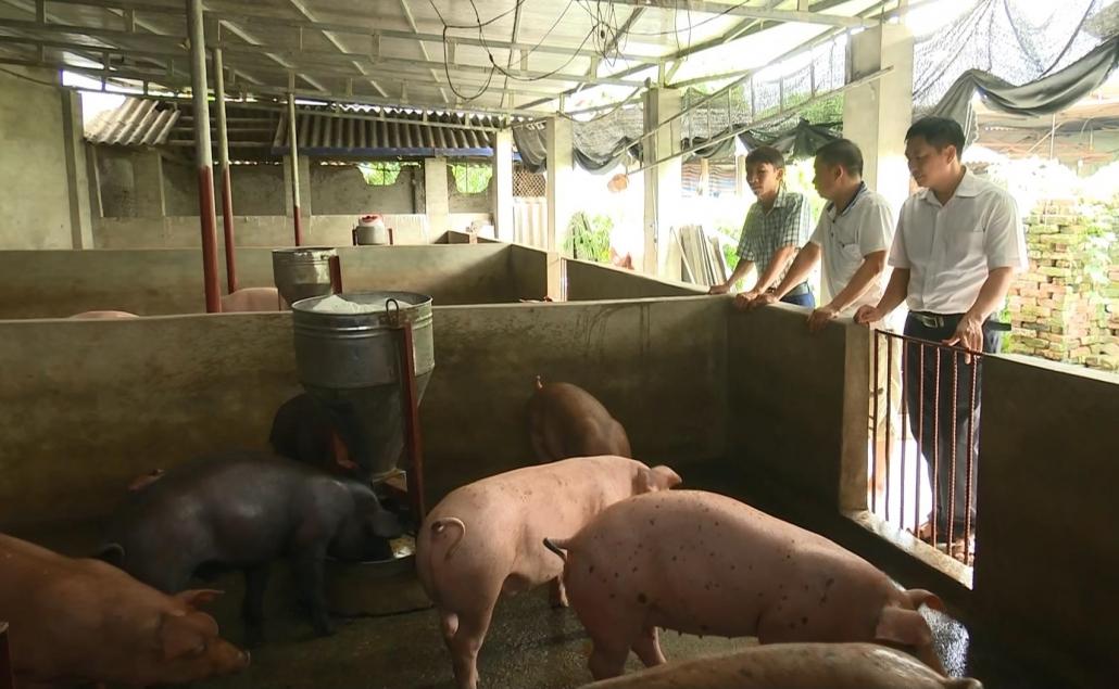 Sẽ quy định khu vực chăn nuôi thuộc nội thành và các khu dân cư