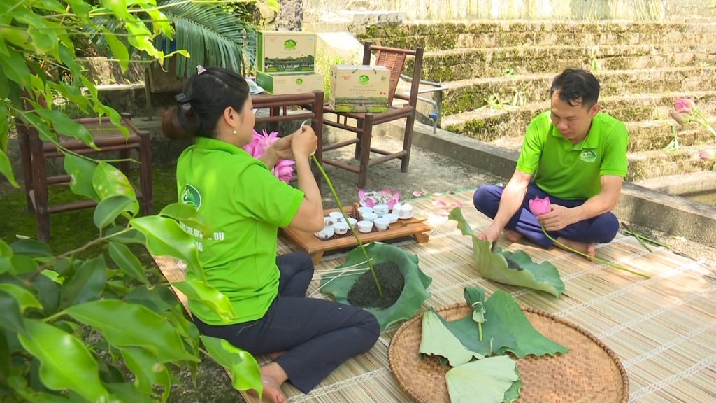 Diversifying tea products in Thai Nguyen Province