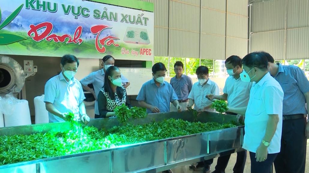 Lãnh đạo tỉnh kiểm tra sản xuất nông nghiệp tại huyện Đại Từ