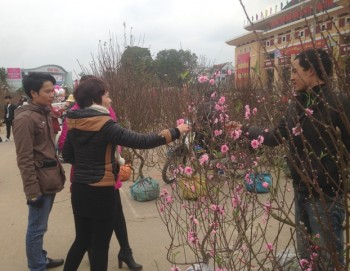thai nguyen nhon nhip cho hoa cay canh ngay tet