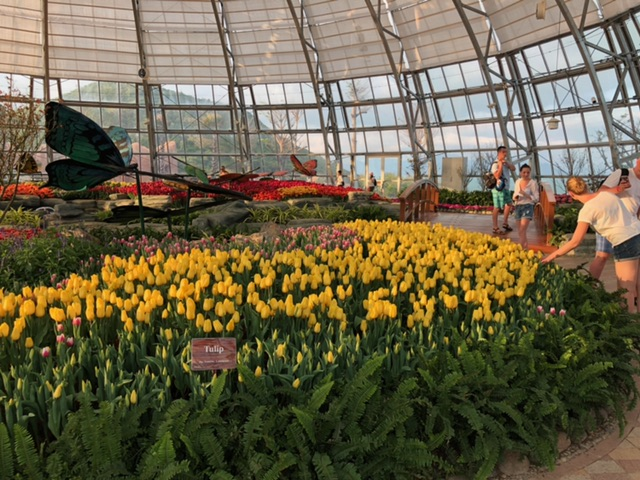 ra mat le hoi tulip lon nhat viet nam tai vinpearl nha trang