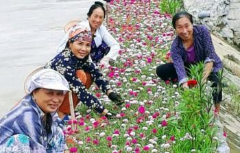 Hà Nam: Trích kinh phí, phát động trồng 150.000 m2 cây hoa hai bên đường