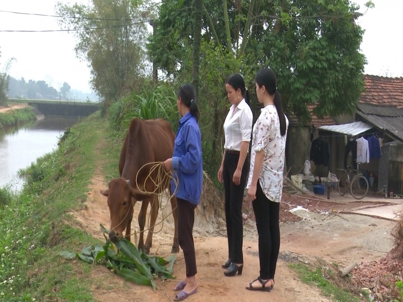 """Dự án """"Ngân hàng bò"""" hỗ trợ gia đình hội viên phụ nữ nghèo"""