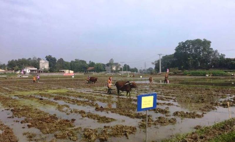 thai nguyen phan dau gieo cay 29000 ha lua vu xuan