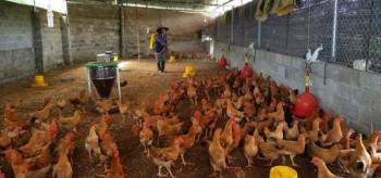 Thị xã Phổ Yên: Triển khai công tác vệ sinh an toàn thực phẩm và phòng, chống dịch bệnh năm 2017