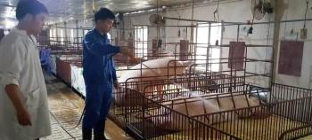 """Giá tiếp tục lên """"cơn sốt"""", người nuôi lợn vừa mừng vừa lo"""
