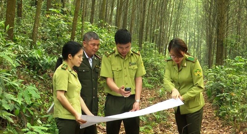 Thái Nguyên: Tăng cường công tác quản lý, bảo vệ rừng