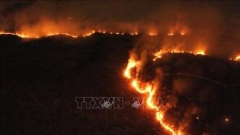 Brazil điều quân đội ngăn cháy rừng Amazon