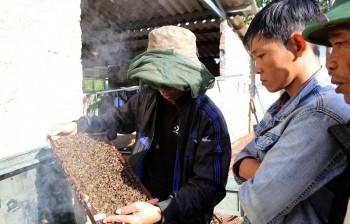 Thừa Thiên-Huế tạo sinh kế bền vững cho người dân miền núi
