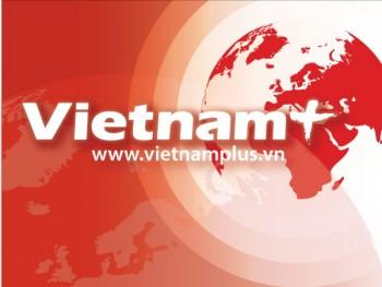 thanh long trai vu giam manh nong dan ba ria vung tau lo nang thi truong vietnam vietnamplus