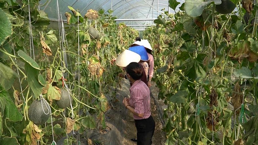 Võ Nhai: Đa dạng trong phát triển cây ăn quả