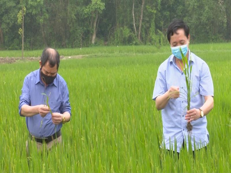 Kiểm tra sản xuất nông nghiệp tại thành phố Sông Công và thành phố Thái Nguyên