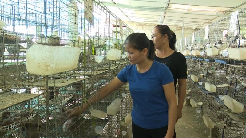 Thái Nguyên: Hội Liên hiệp Phụ nữ triển khai nhiều hoạt động giúp hội viên phát triển kinh tế