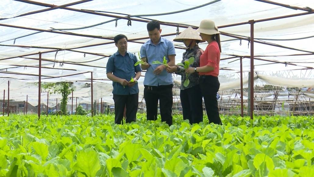 Phổ Yên: phát triển nông nghiệp gắn với xây dựng nông thôn mới