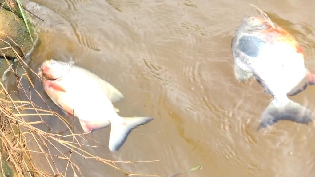Chục tấn cá chết bất thường và nỗi lo về ô nhiễm nguồn nước tại phường Châu Sơn, thành phố Sông Công