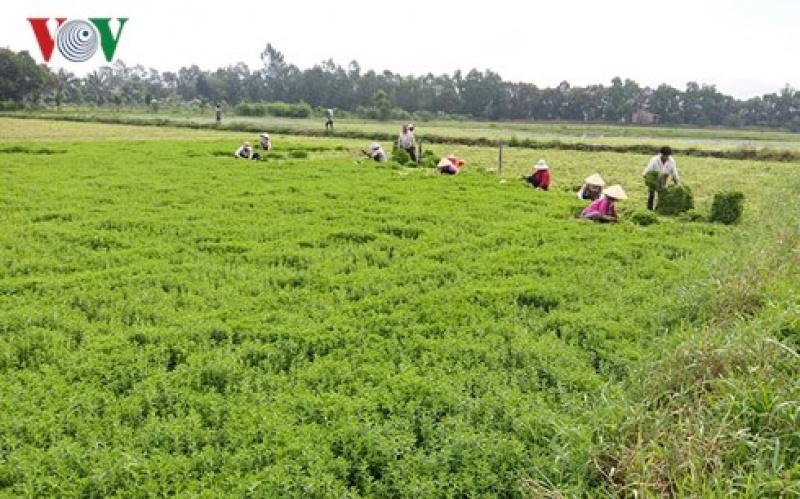 Tiền Giang chủ động hơn 10.000 ha rau màu phục vụ Tết cổ truyền
