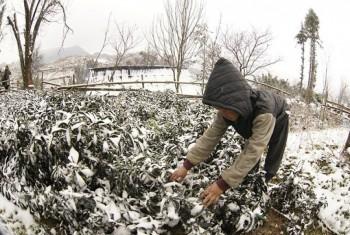 Nhiệt độ ở Lào Cai xuống thấp nhất kể từ đầu mùa đông