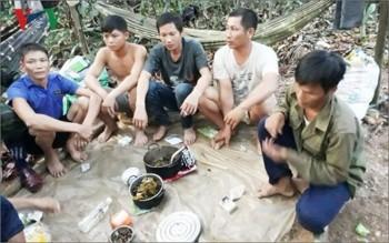 Phá rừng quy mô lớn ở Quảng Bình: Xem xét trách nhiệm người đứng đầu