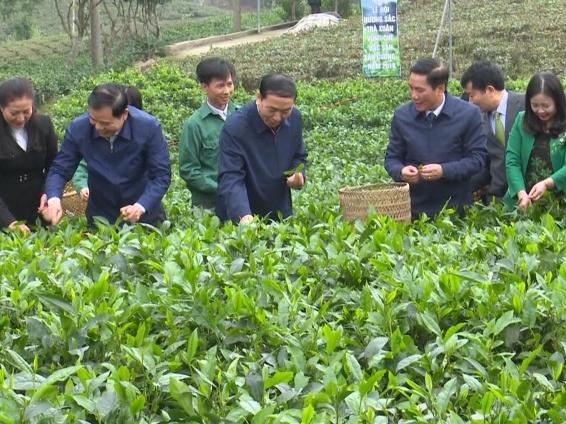 """Sôi nổi Lễ hội """"Hương sắc trà xuân - Vùng chè đặc sản Tân Cương"""" năm 2018"""
