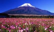nhung le hoi hoa ruc sac xuan ai cung ao uoc duoc den 1 lan trong doi