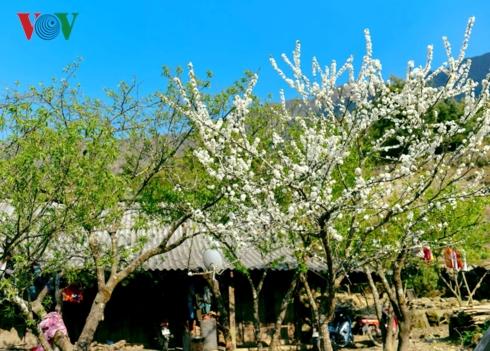 Tây Bắc Xuân về rộn hoan ca