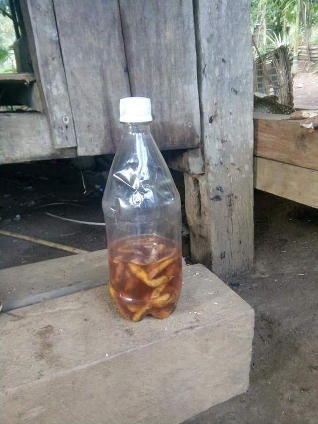 3 giáo viên bị ngộ độc vì uống rượu ngâm rễ lá cây rừng