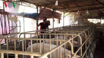 """""""Thủ phủ"""" chăn nuôi trước nguy cơ dịch tả lợn Châu Phi"""