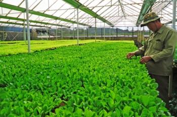 Nông dân vẫn thiếu kiến thức làm nông nghiệp công nghệ cao
