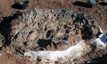 Phát hiện hố nước chứa gần chục hóa thạch khủng long