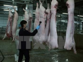 Ninh Thuận đầu tư 16,5 tỷ đồng xây dựng cơ sở giết mổ hiện đại