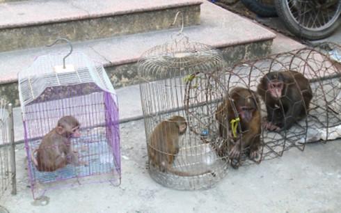 Bắt quả tang 2 đối tượng buôn bán, nuôi nhốt cá thể động vật hoang dã