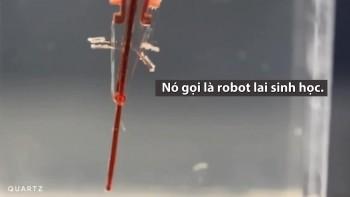 robot lai sinh hoc cu dong nhu ngon tay nguoi