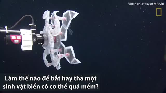 robot bat sinh vat bien sau bang long chua mem