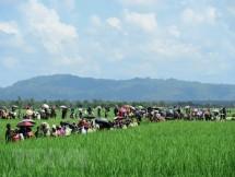 myanmar khung bo tai bang rakhine van la moi de doa tai khu vuc