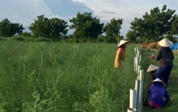 Tái cơ cấu nông nghiệp trên vùng hạn - cách làm mới từ Ninh Thuận