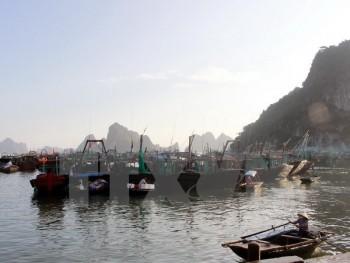 Các tỉnh, thành phố từ Quảng Ninh đến Khánh Hòa đối phó bão Tokage