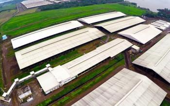 Gia tăng số lượng trang trại và mô hình cánh đồng mẫu lớn