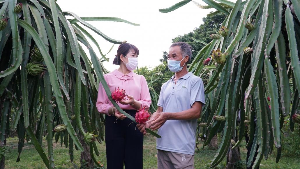 [Photo] Đa dạng trong phát triển cây ăn quả ở Võ Nhai