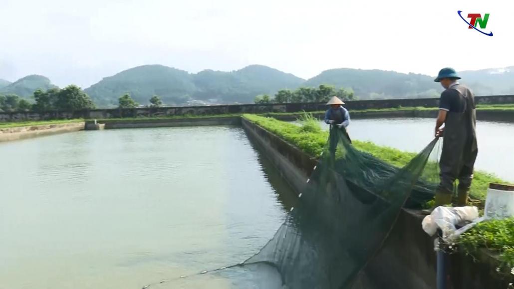 Sản lượng thủy sản tăng trên 10% so với cùng kỳ