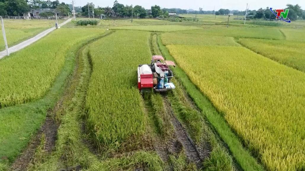 Gần 71 tỷ đồng hỗ trợ sản xuất nông nghiệp
