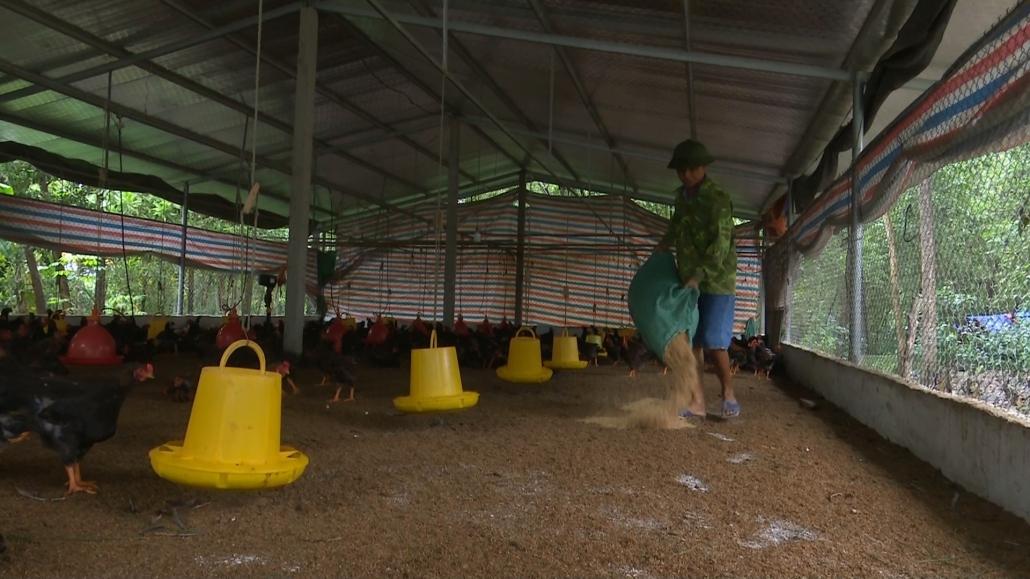 Khuyến khích phát triển chăn nuôi theo hướng an toàn sinh học