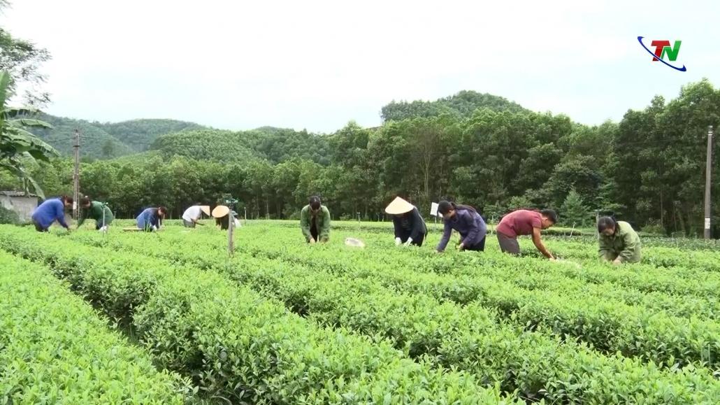 Nâng cao giá trị nông sản theo hướng OCOP