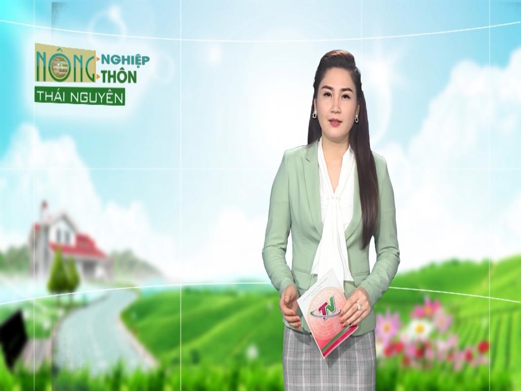 Nông nghiệp nông thôn ngày 20/4/2021